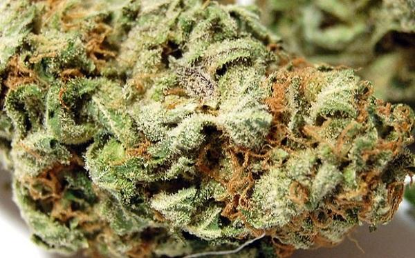 lemon-kush-marijuana-strain-1