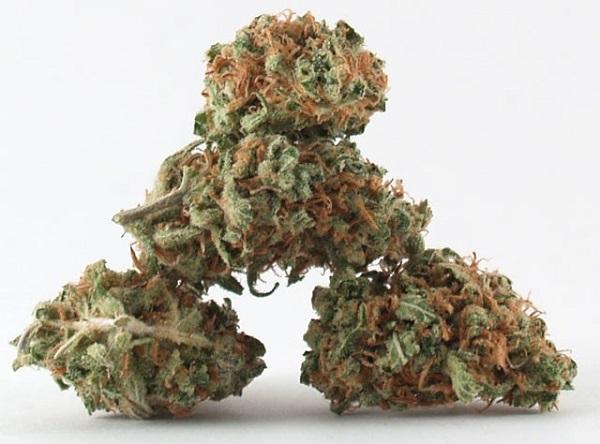 lemon-kush-marijuana-strain-2